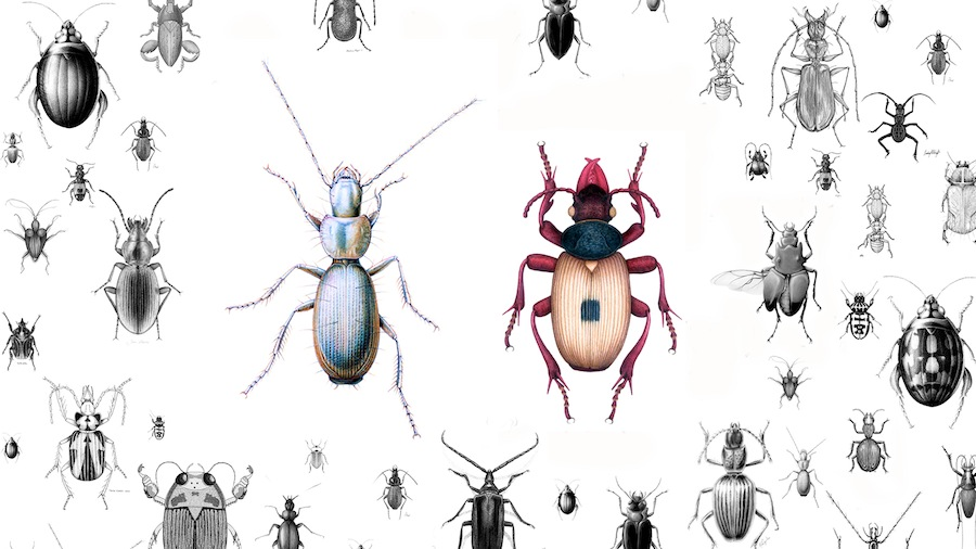 The specially designed wallpaper features custom drawn illustrations of a unique species of beetle discovered in a cave in Slovenia in 1937. The scientist who discovered the species was allowed to pick the name. He called the insect, Anophthalmus Hitleri, after a man he greatly admired, Adolf Hitler. Wallpaper design by the artist. Inset color illustrations by Sandra Doyle and Tanza Croutch. Courtesy of the artist and Galerija Škuc, © Jasmina Cibic, All Rights Reserved.